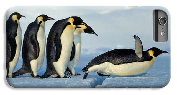 Emperor Penguin Aptenodytes Forsteri IPhone 6 Plus Case by Hans Reinhard