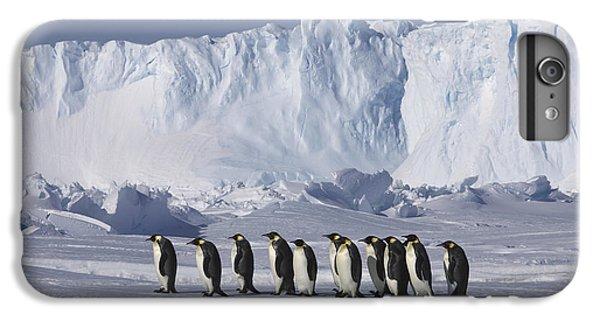 Emperor Penguins Walking Antarctica IPhone 6 Plus Case by Frederique Olivier