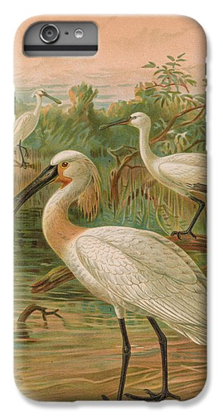 Eurasian Spoonbill IPhone 6 Plus Case by J G Keulemans