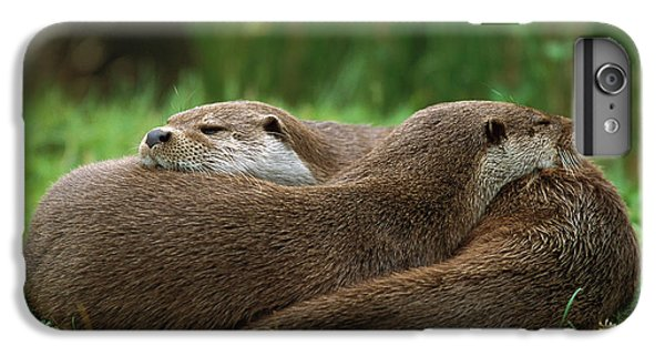 European River Otter Lutra Lutra IPhone 6 Plus Case by Ingo Arndt