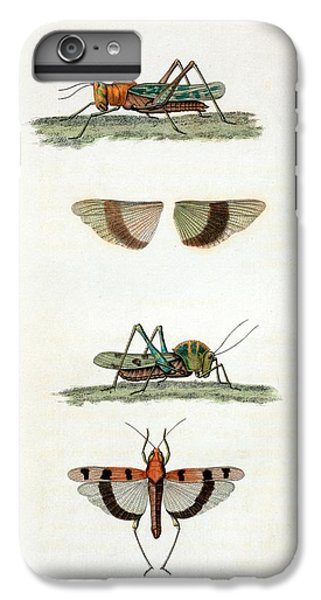 Field Crickets IPhone 6 Plus Case by General Research Division/new York Public Library