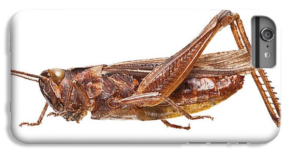 Field Grasshopper IPhone 6 Plus Case by Natural History Museum, London
