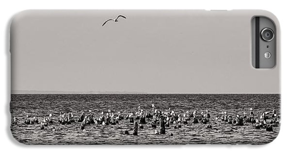 Flock Of Seagulls In Black And White IPhone 6 Plus Case by Sebastian Musial