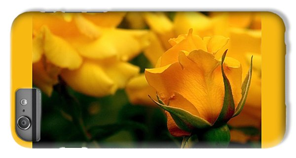 Friendship Roses IPhone 6 Plus Case by Rona Black