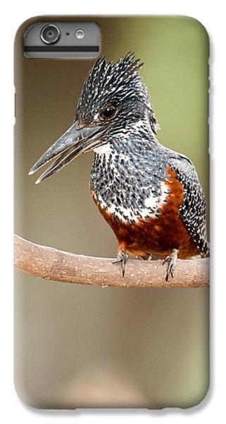 Giant Kingfisher Megaceryle Maxima IPhone 6 Plus Case by Panoramic Images