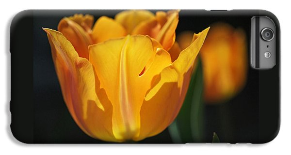 Glowing Tulips IPhone 6 Plus Case by Rona Black