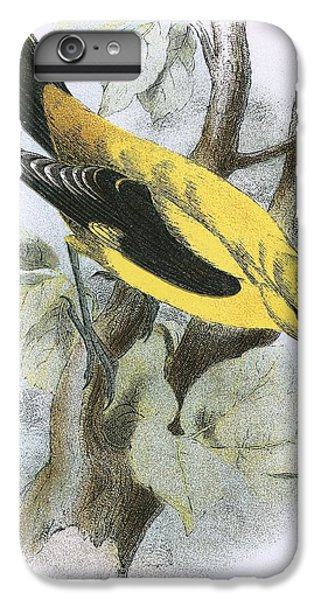 Golden Oriole IPhone 6 Plus Case by English School