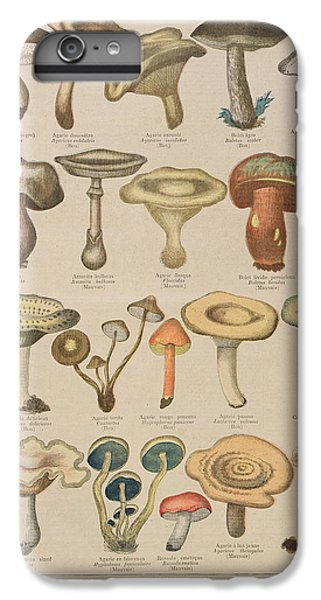 Good And Bad Mushrooms IPhone 6 Plus Case by French School