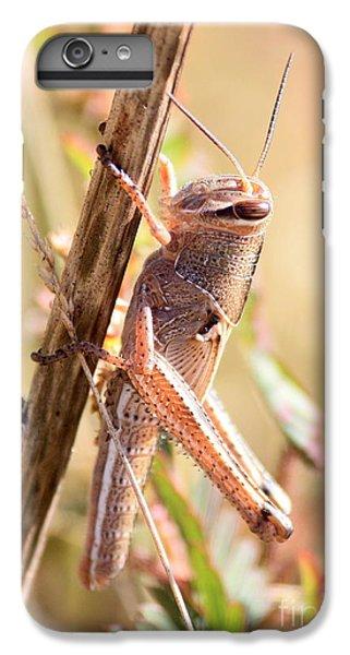 Grasshopper In The Marsh IPhone 6 Plus Case by Carol Groenen