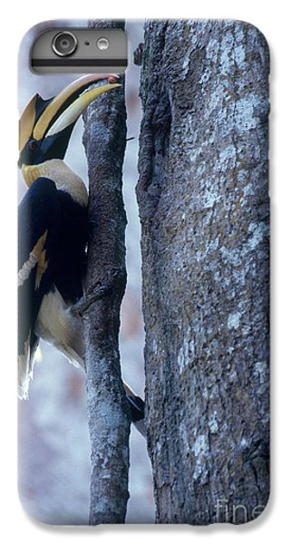 Great Hornbill IPhone 6 Plus Case by Art Wolfe