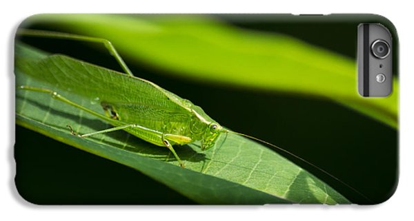 Green Katydid IPhone 6 Plus Case by Christina Rollo
