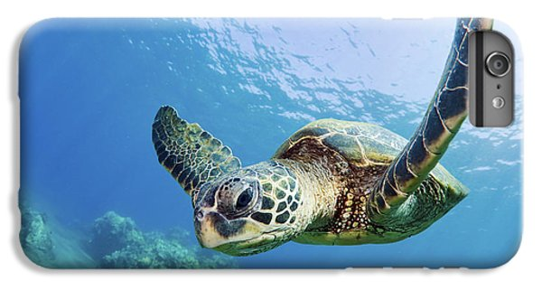 Green Sea Turtle - Maui IPhone 6 Plus Case by M Swiet Productions