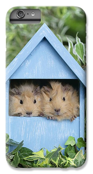 Guinea Pig In House Gp104 IPhone 6 Plus Case by Greg Cuddiford