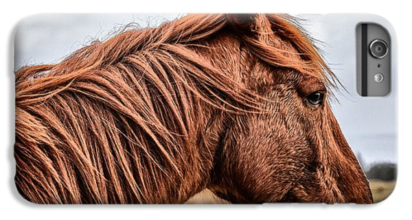 Horsey Horsey IPhone 6 Plus Case by John Farnan