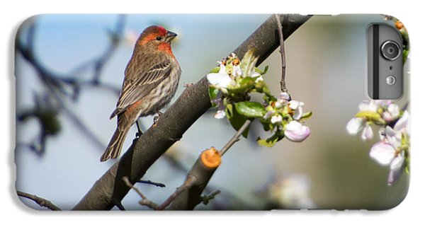 House Finch IPhone 6 Plus Case by Mike Dawson