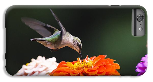 Hummingbird In Flight With Orange Zinnia Flower IPhone 6 Plus Case by Christina Rollo