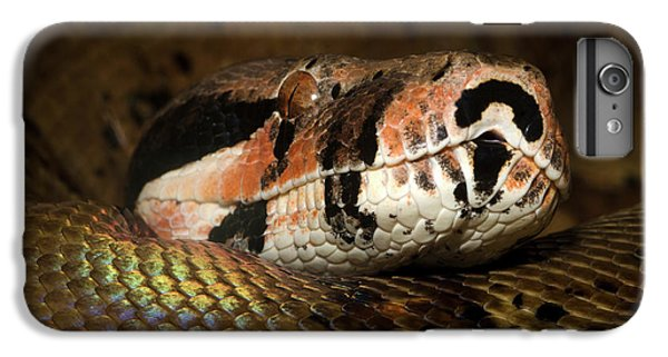Hypo Colombian Boa IPhone 6 Plus Case by Nigel Downer