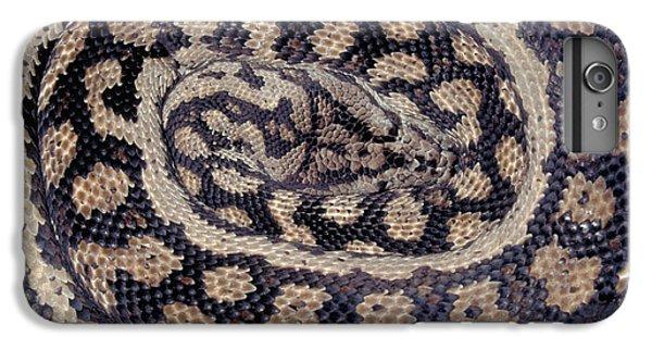 Inland Carpet Python  IPhone 6 Plus Case by Karl H Switak