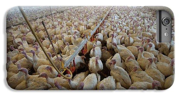 Intensive Turkey Farm IPhone 6 Plus Case by Peter Menzel