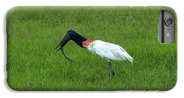 Jabiru Stork Swallowing An Eel IPhone 6 Plus Case by Gregory G. Dimijian, M.D.