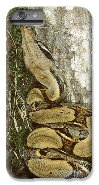Juvenile Boa Constrictor IPhone 6 Plus Case by Gregory G. Dimijian, M.D.