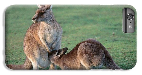 Kangaroo With Joey IPhone 6 Plus Case by Gregory G. Dimijian, M.D.