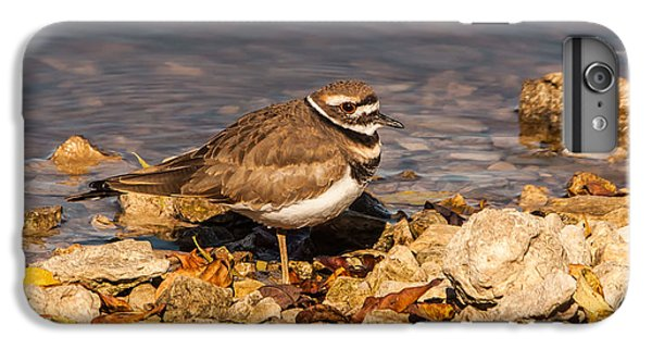 Kildeer On The Rocks IPhone 6 Plus Case by Robert Frederick
