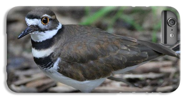 Killdeer IPhone 6 Plus Case by Dan Sproul