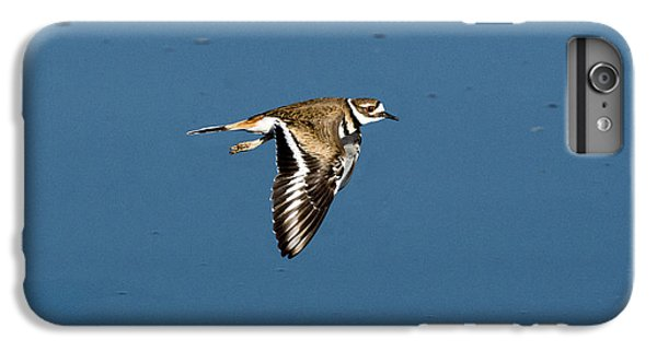 Killdeer In Flight IPhone 6 Plus Case by Anthony Mercieca