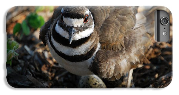 Killdeer Mom IPhone 6 Plus Case by Skip Willits