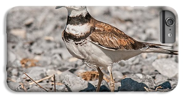 Killdeer Nesting IPhone 6 Plus Case by Lara Ellis