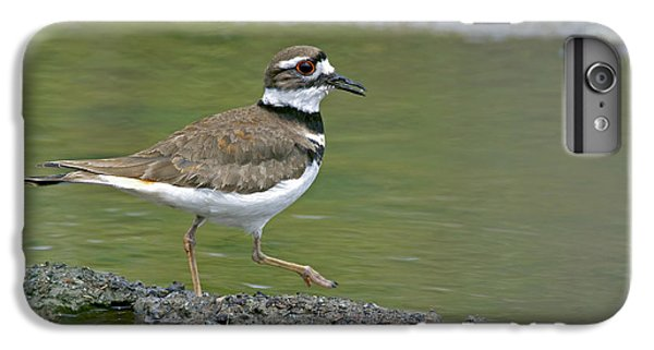 Killdeer Walking IPhone 6 Plus Case by Sharon Talson