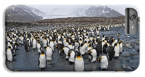 King Penguins Aptenodytes Patagonicus IPhone 6 Plus Case by Panoramic Images