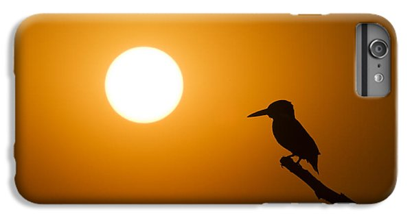Kingfisher Sunset IPhone 6 Plus Case by Tim Gainey