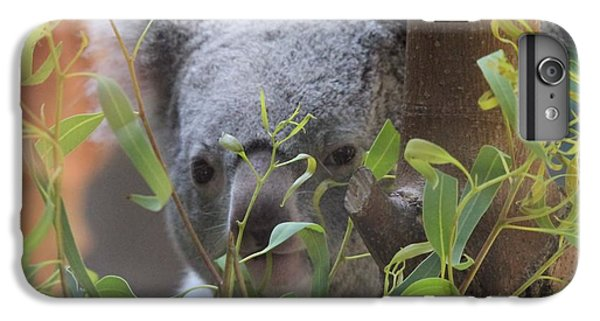 Koala Bear  IPhone 6 Plus Case by Dan Sproul