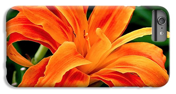 Kwanso Lily IPhone 6 Plus Case by Rona Black