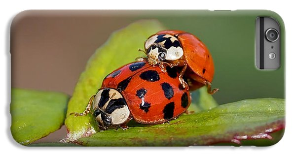 Ladybird Coupling IPhone 6 Plus Case by Rona Black
