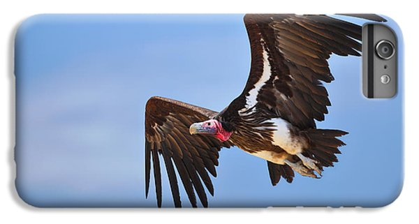 Lappetfaced Vulture IPhone 6 Plus Case by Johan Swanepoel