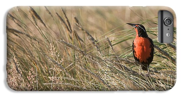 Long-tailed Meadowlark IPhone 6 Plus Case by John Shaw