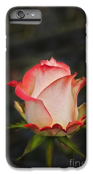 Love Is A Rose II IPhone 6 Plus Case by Al Bourassa