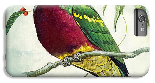 Magnificent Fruit Pigeon IPhone 6 Plus Case by Bert Illoss