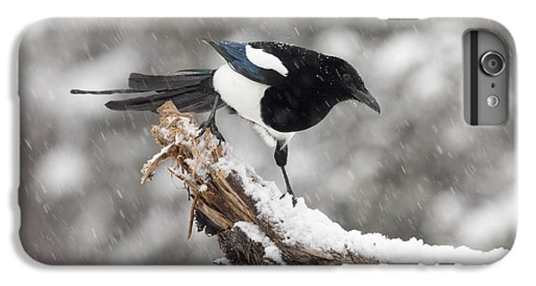 Magpie Out On A Branch IPhone 6 Plus Case by Tim Grams