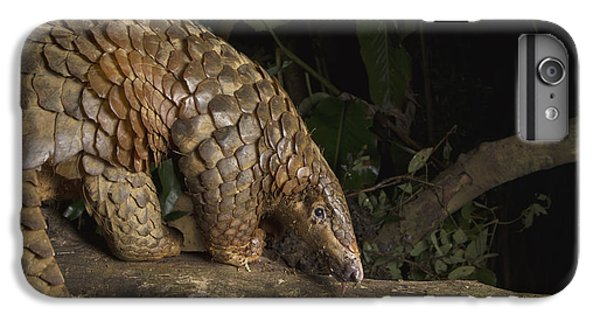 Malayan Pangolin Eating Ants Vietnam IPhone 6 Plus Case by Suzi Eszterhas