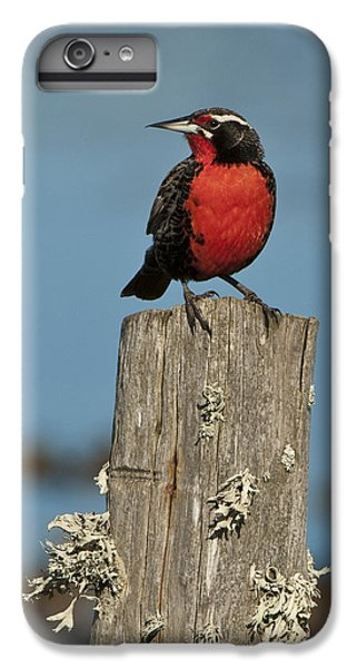Male Long-tailed Meadowlark On Fencepost IPhone 6 Plus Case by John Shaw