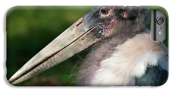 Marabou Stork IPhone 6 Plus Case by Nigel Downer