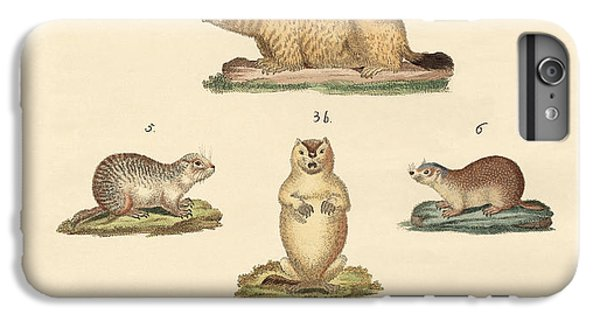 Marmots And Moles IPhone 6 Plus Case by Splendid Art Prints