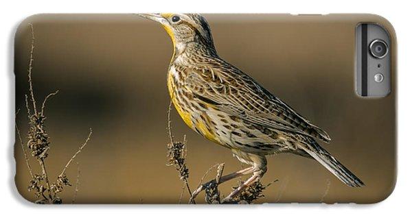 Meadowlark On Weed IPhone 6 Plus Case by Robert Frederick