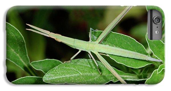 Mediterranean Slant-faced Grasshopper IPhone 6 Plus Case by Nigel Downer