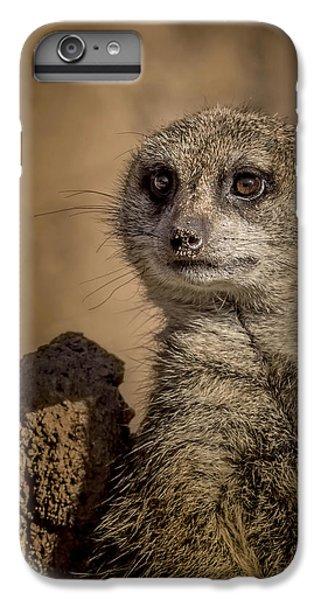 Meerkat IPhone 6 Plus Case by Ernie Echols