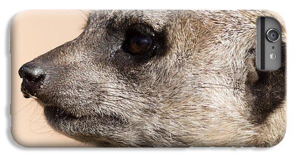Meerkat Mug Shot IPhone 6 Plus Case by Ernie Echols